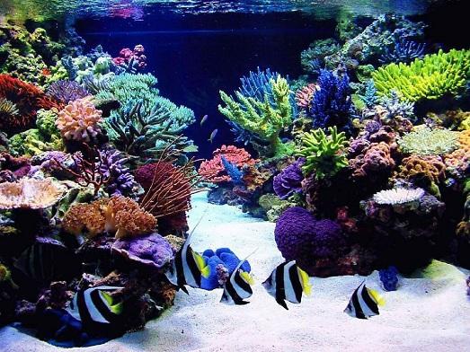 дизайн аквариума в морском стиле фото