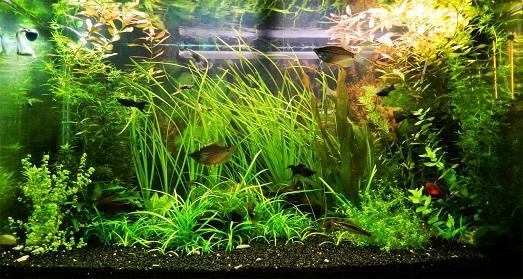 home aquarium design photo
