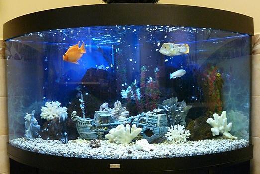 какой можно сделать дизайн аквариума фото