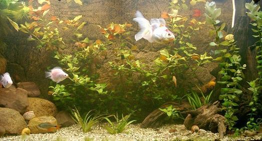 необычные дизайны аквариума фото