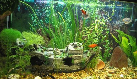 украшения для аквариума фото