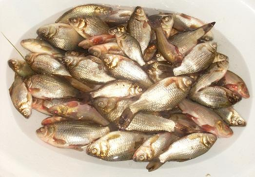 Часто рыбу чистить совсем не обязательно