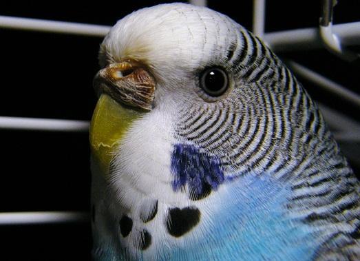 Говорите попугаю приятные слова
