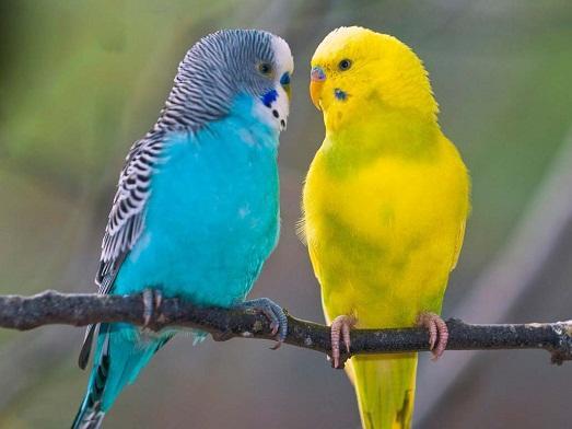 Ухаживайте за птицей и она вас отблагодарит