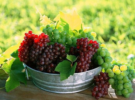 Виноград должен быть качественным
