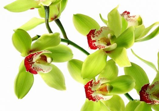 Очень яркое растение