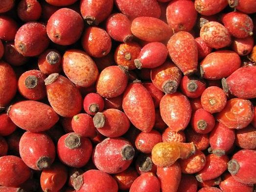 Вот так выглядят плоды