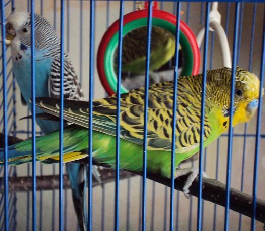 Многие любят этих птичек