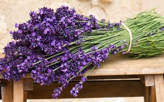 Лаванда – применение и свойства этого растения