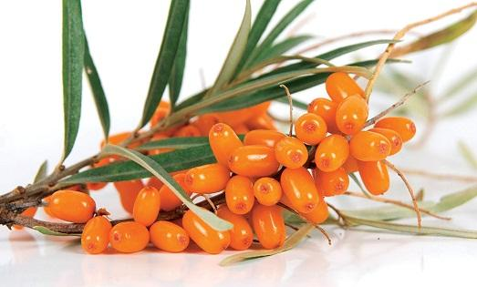 Красивые плоды