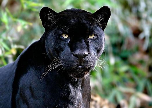 Топ 10 наиболее красивых животных в мире (10 фото)