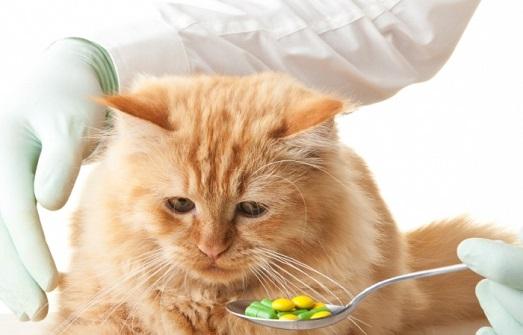Коты ненавидят таблетки