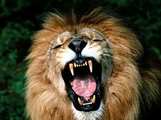 Топ 10 самых опасных животных в мире