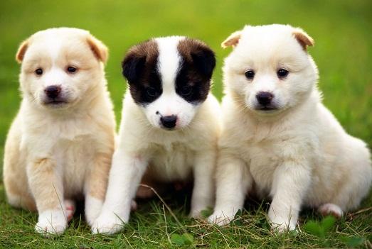 Лучшие имена для своей собаки