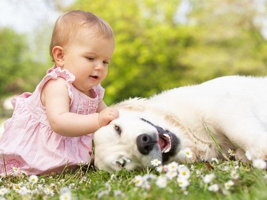 Топ 10 самых умных и добрых пород собак в мире (10 фото)