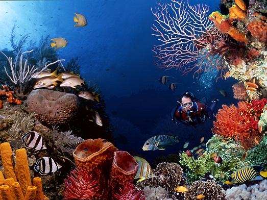 Шикарный мир под водой
