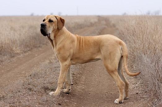 Собака из Бразилии