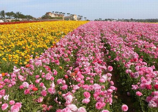 Valley of roses