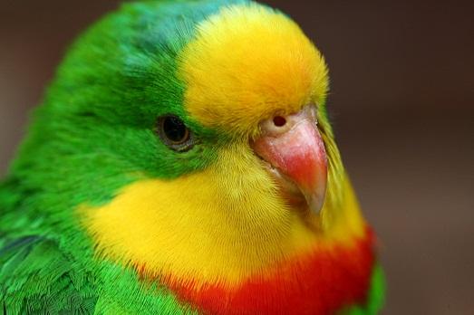Лучшие имена для попугаев