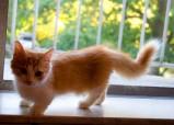 Что нужно сделать, если вы хотите взять бездомного кота?