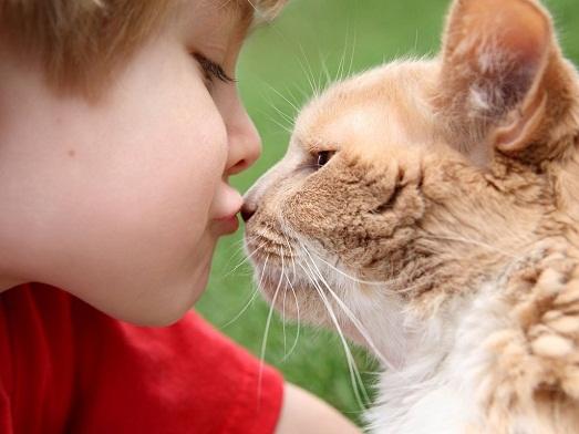 Как лечить домашних животных от лишая?