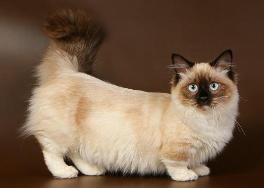 Оригинальный котик
