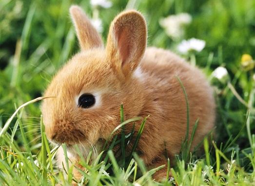 Как ухаживать за домашним кроликом?