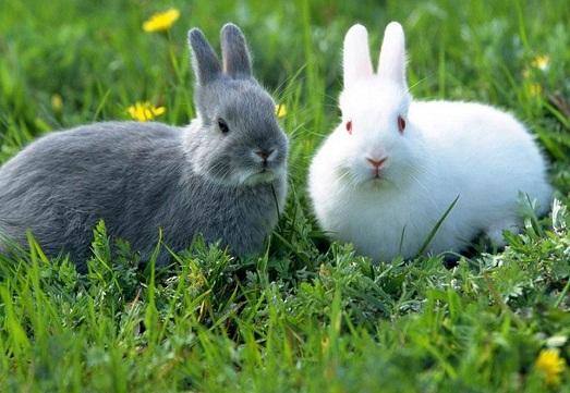 Кролики как за ними ухаживать в домашних условиях 477