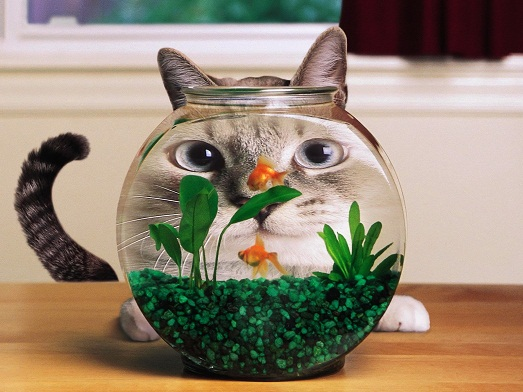 Развлечение для кота