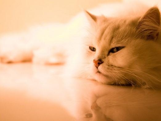 Почему кошки постоянно мурлыкают?