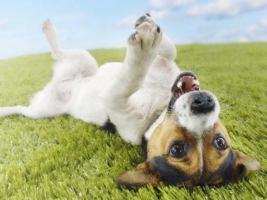 Как самому дрессировать собаку?