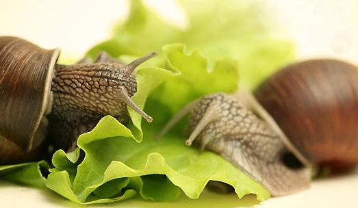 Кушают листья