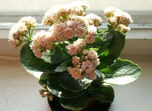 Оригинальный цветок