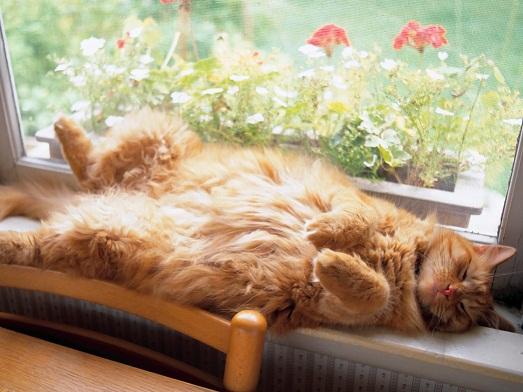 Спит сладким сном