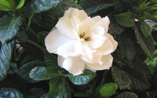 Цветет очень красиво
