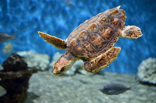 Какой уход нужен черепахе?