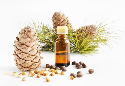 Удивительные свойства кедрового масла
