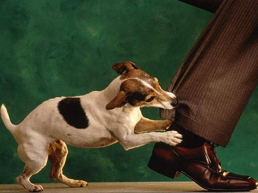 Опасайтесь агресивных собак