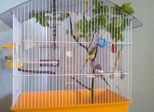 Как можно сделать клетку для попугайчика?