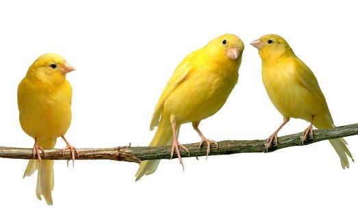 Милая пташка