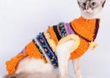 Модный кот