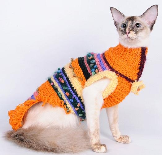Интересная одежда для животных своими руками
