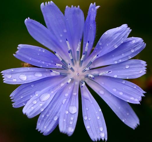 Полезный цветок