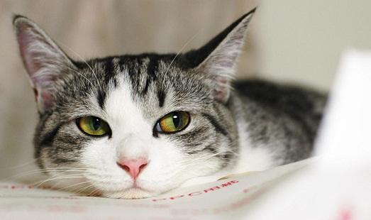 Что делать, если у кошки начался насморк?