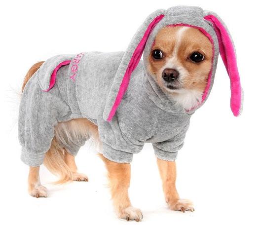 Шикарный пес