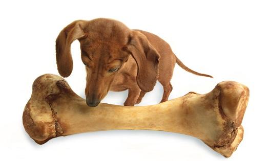 Каким должно быть правильное питание собаки?