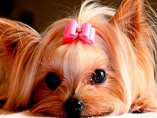Топ 10 популярных декоративных пород собак