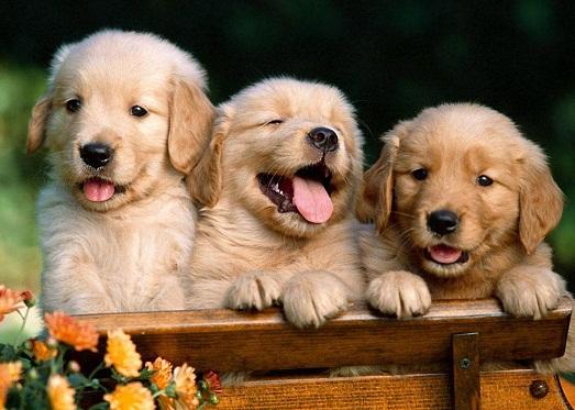 Топ 10 интересных фактов о собаках