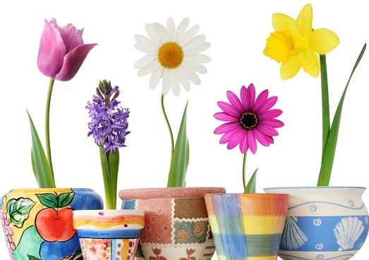 Почему в доме цветы не растут