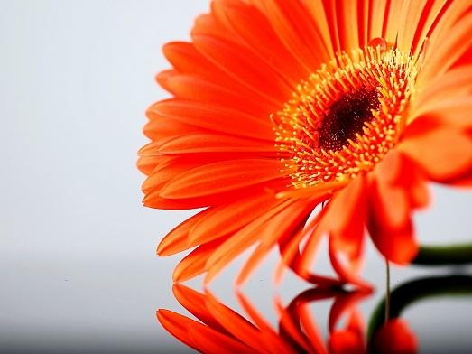Правильное значение оранжевого цвета